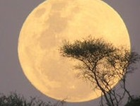 Super Perigee Full Moon tonight!
