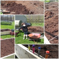 raised bed garden manure