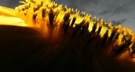 Sunflowers at Dusk – Wordless Wednesday