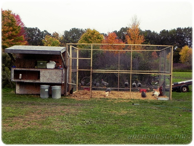 chicken pen and old coop
