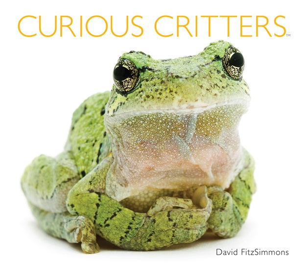 curious critters cover