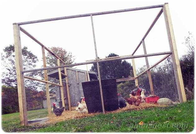penned chickens