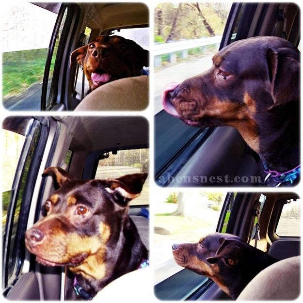 Ginger car ride collage