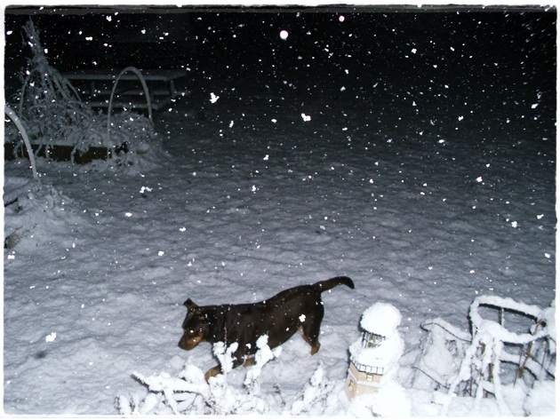 first snow November-11-2011