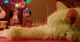 Stuff your pet's stockings with toys and treats using 1800Petmeds + holiday safety tips!