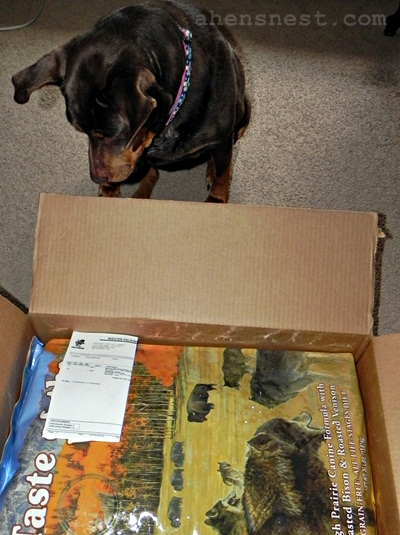 Ginger checks out her package from Mr.Chewy