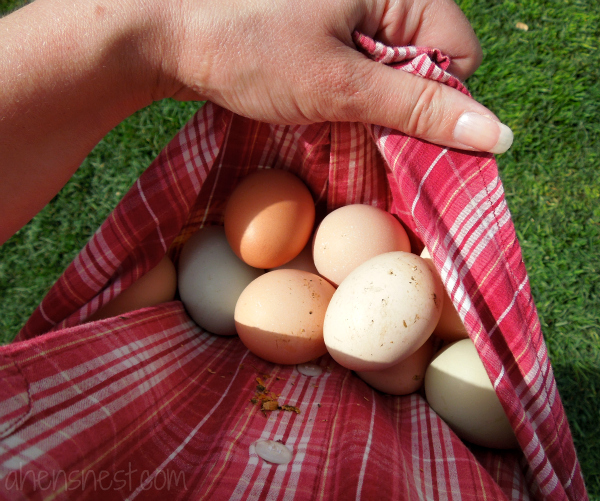 colorful and fresh chicken eggs
