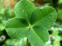 What's on our St. Patrick's Day Menu? #Pinterest
