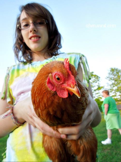 Tweet the chicken