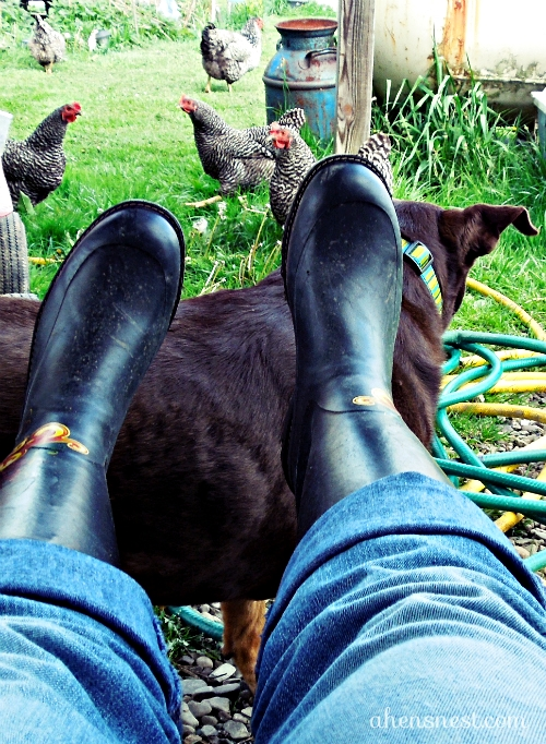 boots and a dog and chickens