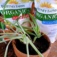 whitney-farms-plant-food