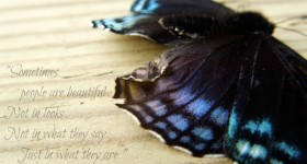 quote butterfly