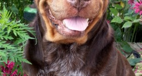 Wordless Wednesday – When Ginger Smiles #ww