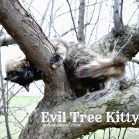 evil tree kitty