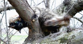 Wordless Wednesday – Evil Tree Kitty #ww