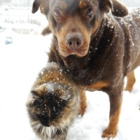 best-friends snow