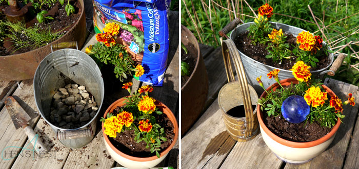 potted marigolds