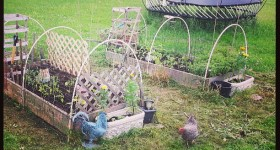 stay-out-of-the-garden-chickens