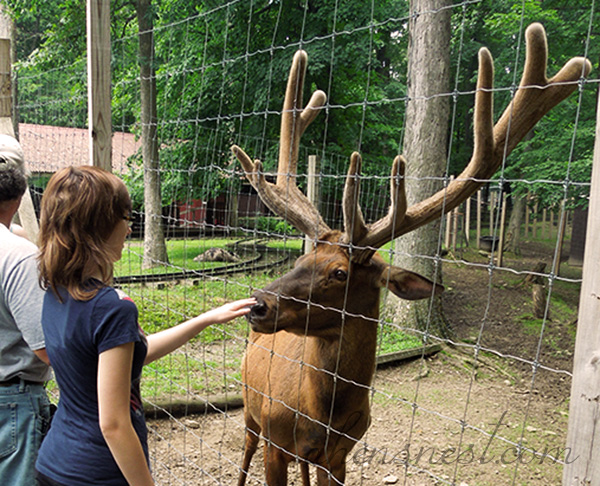 elk-and-girl-at-deer-park