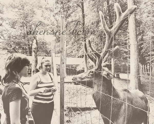 elk-and-girl-deer-park