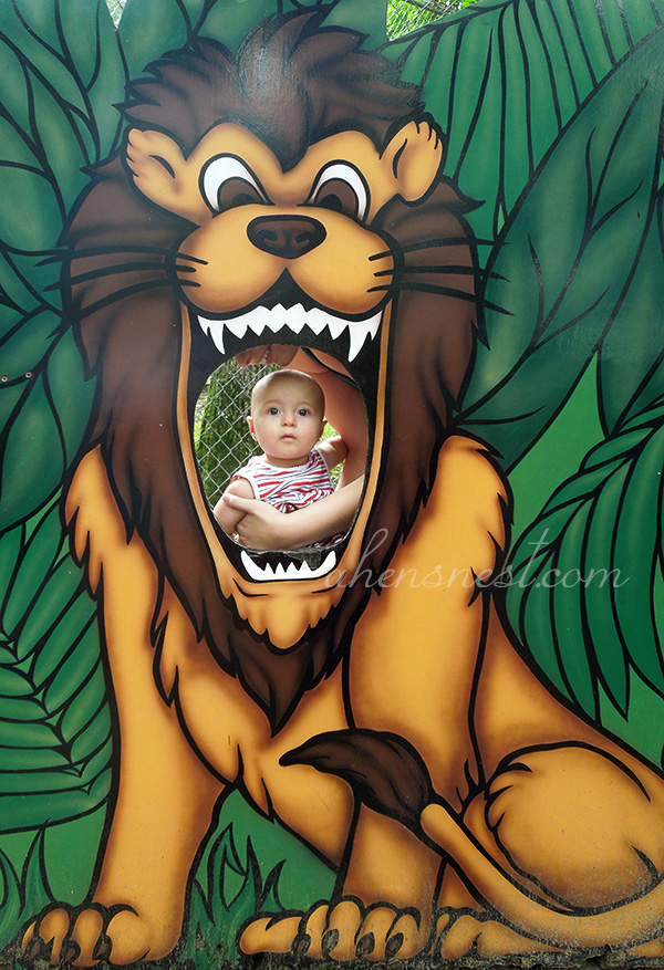 first-zoo-trip-baby-lion-head