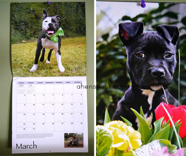 Dog-Park-Publishing-Love-PitBulls-Calendar-gift