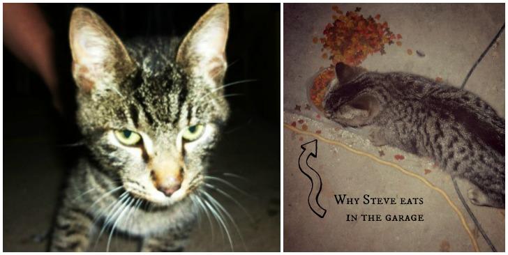 Steve-the-cat-doesn't-like-close-ups