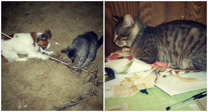 Steve-the-cat-plays