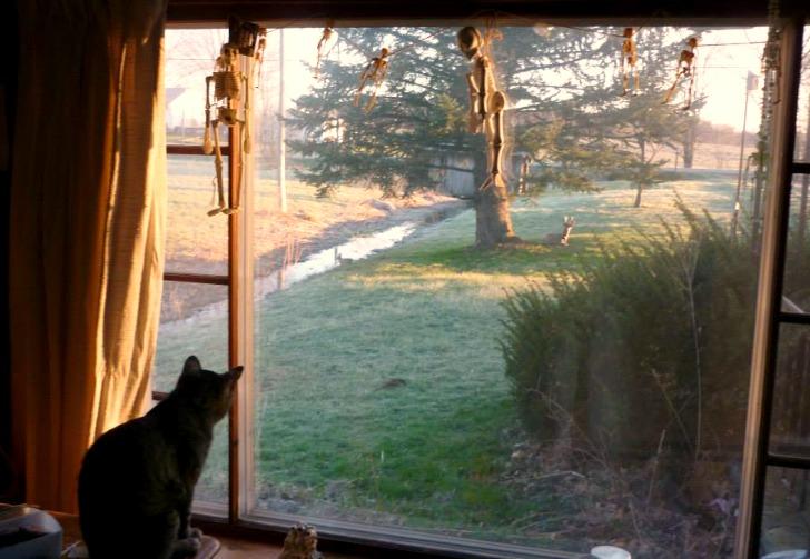 Steve-the-cat-window-sitting