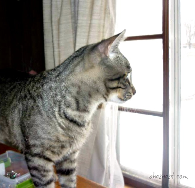 Steve-Cat-Window