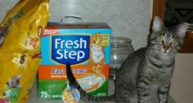Meow Mix® and Fresh Step® keep my cat and I happy #WalmartLovesCats