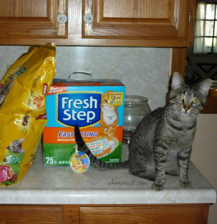 Steve the cat likes Fresh Step