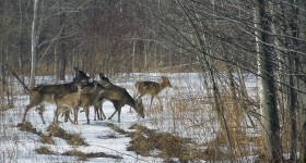 Wordless Wednesday – Deer in the woods #ww