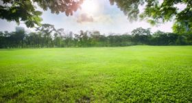 What Farmers Know About Their Lawns