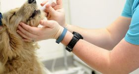 4 Places to Buy Prescription Drugs for Pets: Which One Should You Choose?