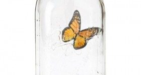 Animated My Butterfly In Jar