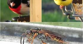 may bird and bee photos