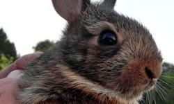 wild bunny