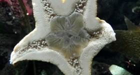 starfish pittsburgh zoo