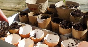 eggs and toilet paper tubes make great recycled seed planters