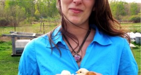 Henrietta and her new chicks