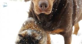 best-friends snow